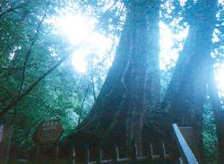 tree5.jpg (10604 bytes)