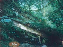 treecross.jpg (12287 bytes)