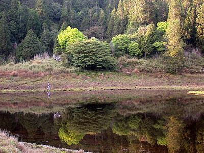 那年加羅湖清晨的湖畔也曾有女子走過,不過不是隋棠,是字戀姊